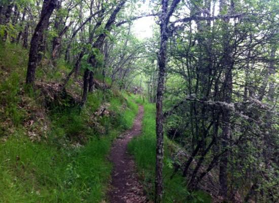 Ruta de senderismo por los bosques de Riaza