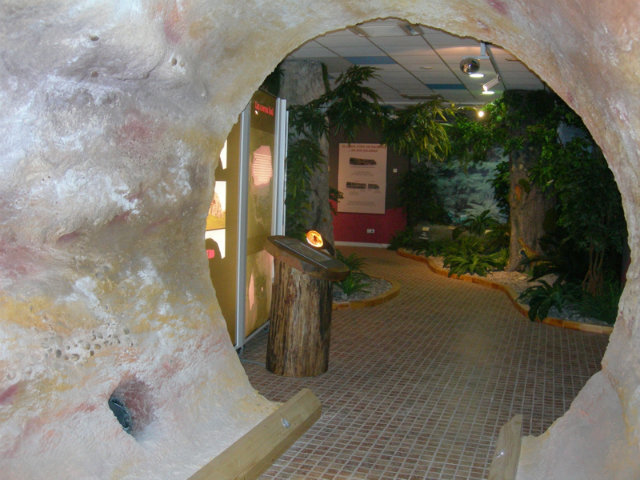centro de visitantes el árbol fósil Fuente: www.arbolfosilhacinas.es
