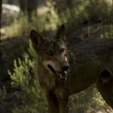 El Centro del Lobo Ibérico, un nuevo espacio para la biodiversidad en la Sierra de la Culebra