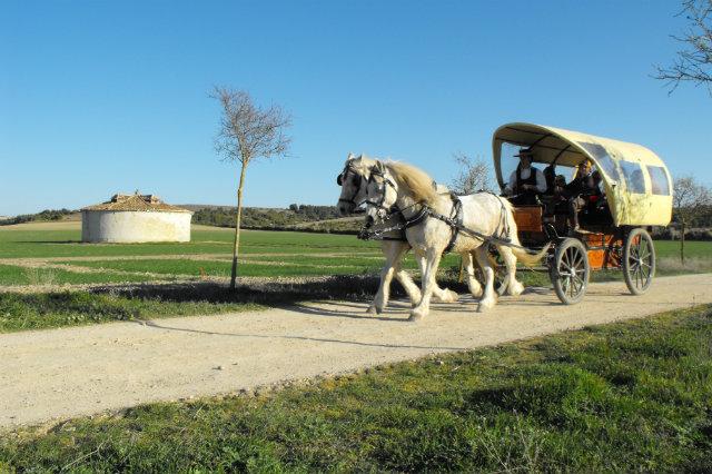 Paseos a caballo en el Centro de Interpretación de la Naturaleza Matallana