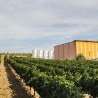 Comentario de la degustación del Analivia Sauvignon Blanc