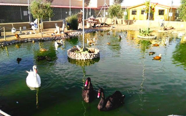 Lago de los patos - Destino Castilla y León