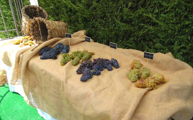 Variedades de uva recogidas en el Museo del Vino - Imagen del Museo del Vino Pagos del Rey
