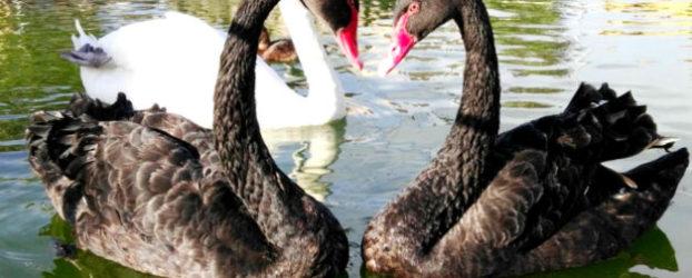 La Era de las Aves, el zoo de las aves al sur de la provincia de Valladolid