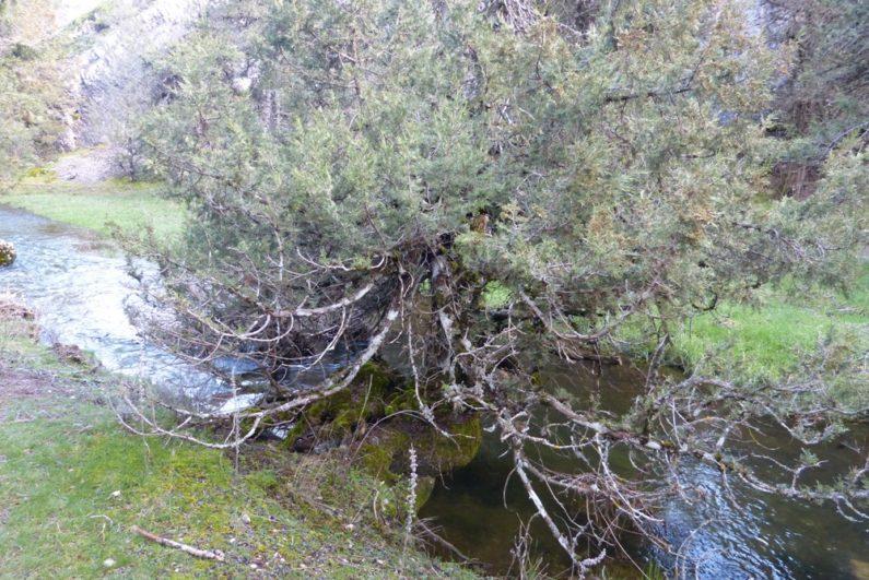 Entorno de la Fuentona, camino a la Cascada
