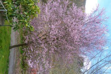 La vida regresa al Valle del Silencio con la primavera
