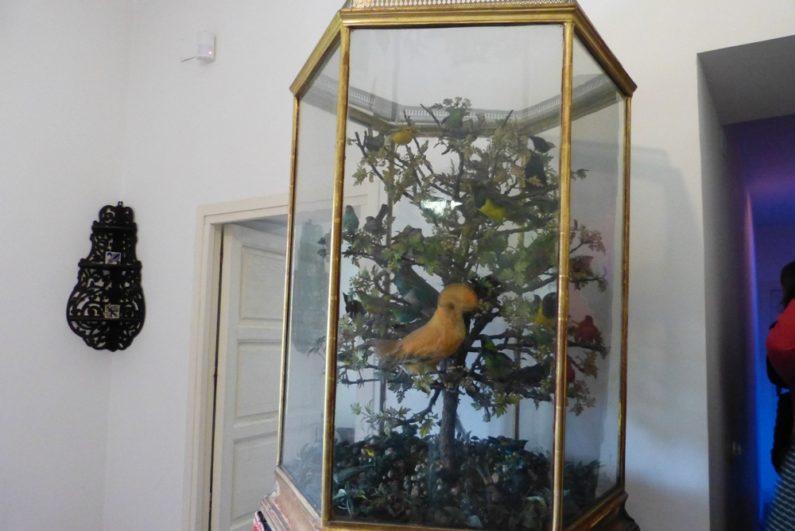 Jaula de pájaros disecados exóticos traídos de diferentes lugares del mundo