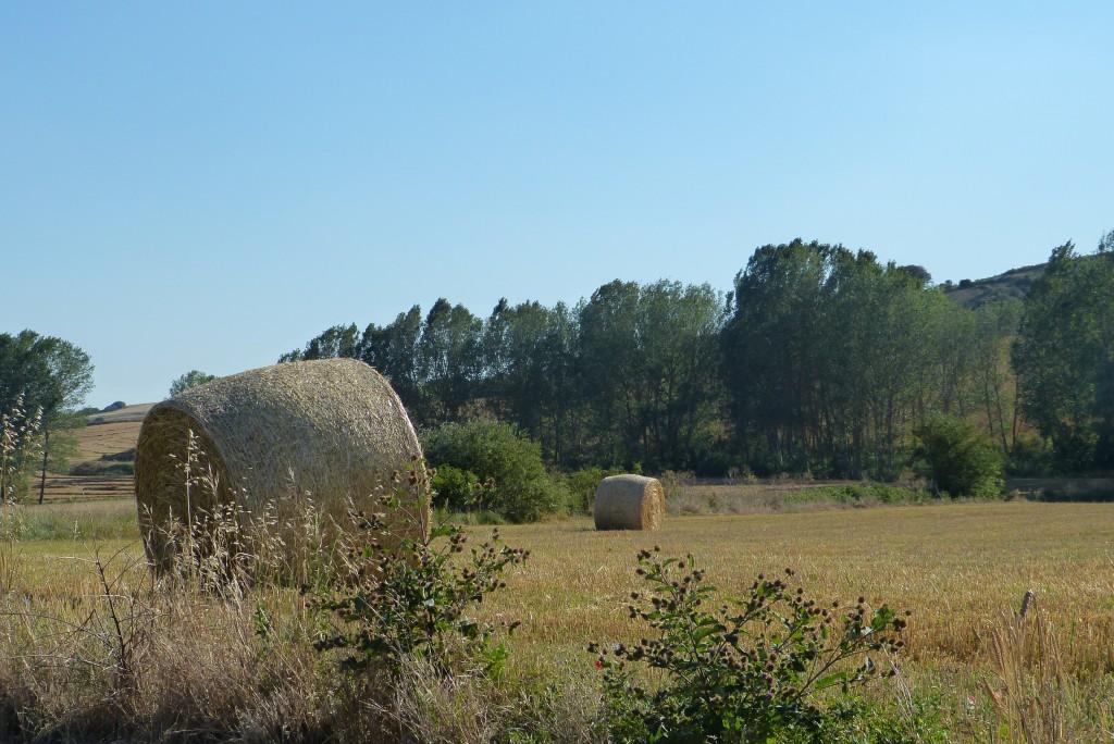Camino por la Ruta del románico palentino