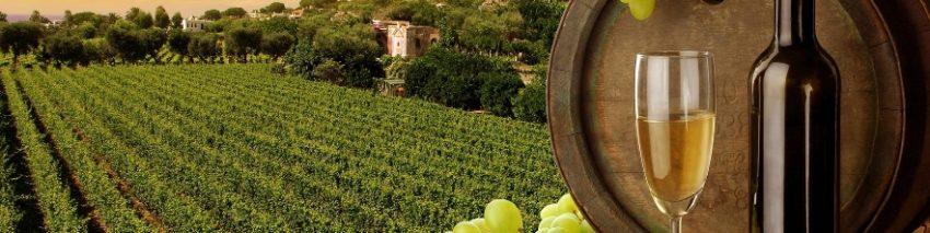vinos blancos de Castilla y León