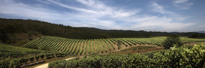 paisajes de viñedos en Rueda Valladolid