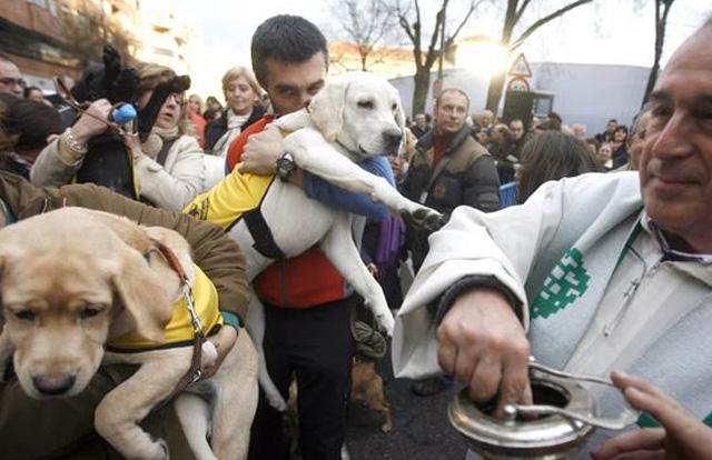 Bendición de los animales en San Antón Fuente: www.schnauzi.com
