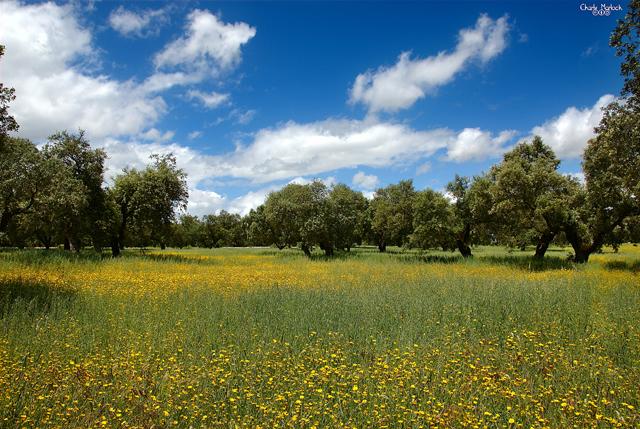 La dehesa salmantina avistar aves en Castilla y León