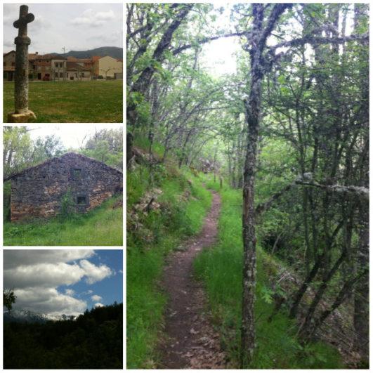 senderismo por los bosques de Riaza