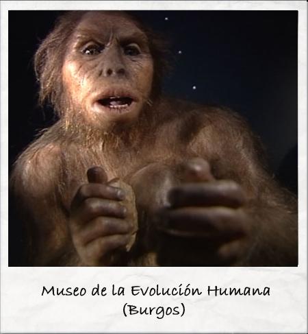 Museo de la Evolución Humana Fuente: www.rtve.es