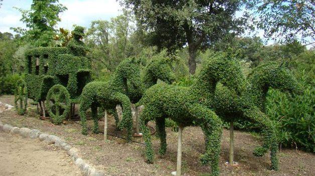 Carro de caballos en el bosque encantado