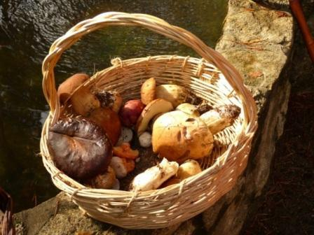 cesta de mimbre para recolectar setas