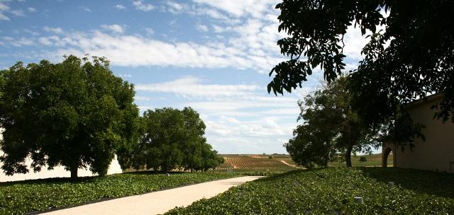Bodega Pago de los Capellanes - Destino Castilla y León - Entorno