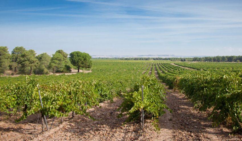 Four Lines - Destino Castilla y León - Viñedos de la Seca