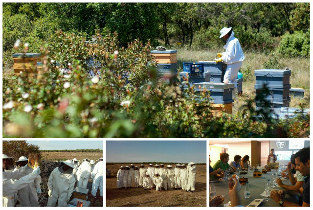 extracción de la miel