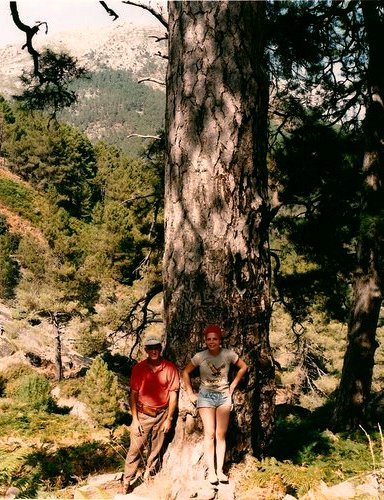 bosques legendarios - Pino bartolo