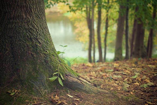 Bosques legendarios de Castilla y León