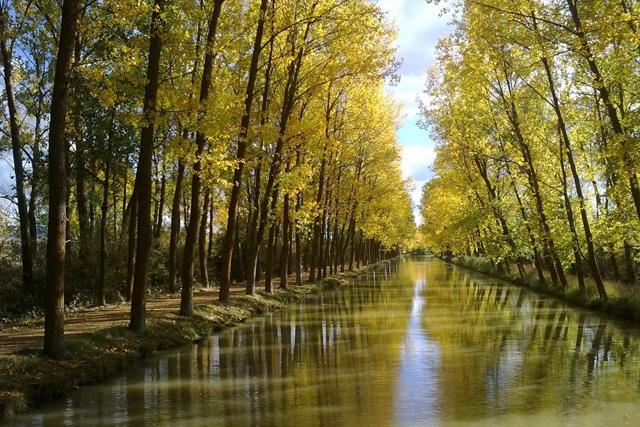 Canal de Castilla - Entre chopos - Destino Castilla y León