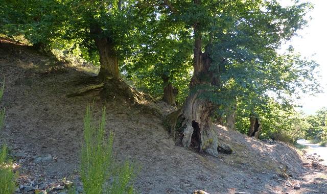 Naturaleza en las Médulas - Destino Castilla y León
