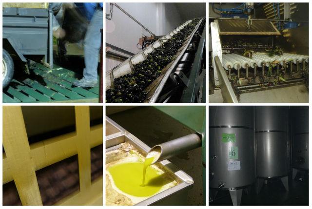 Proceso de elaboración del aceite de oliva virgen extra - Destino Castilla y León