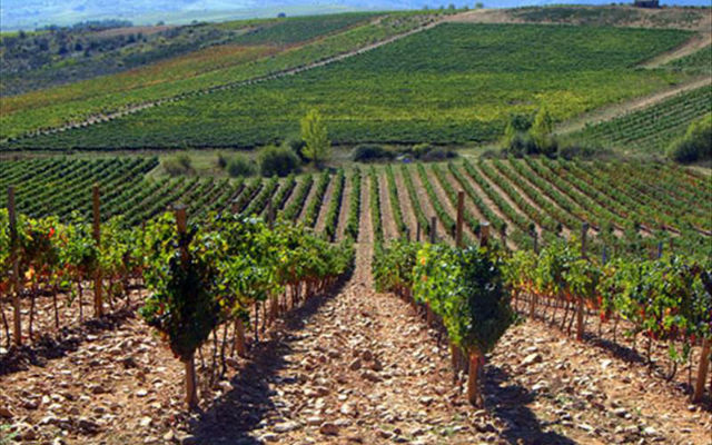 Viñedos de Vinos de la Tierra de Castilla y León