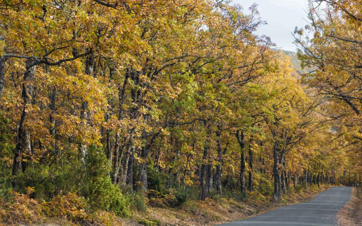 Ruta del Color desde Riaza - Imagen de Nave Ibérica