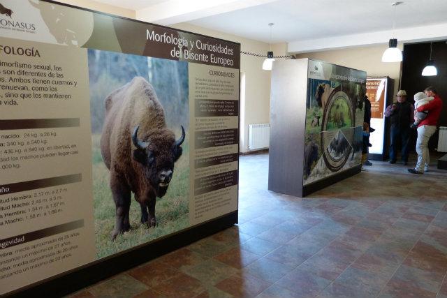 Centro de Interpretación del Bisonte Europeo Bison Bonasus - Destino Castilla y León