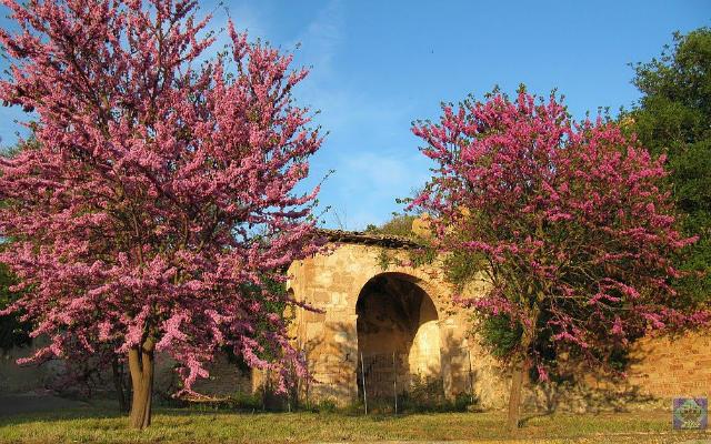 más monasterios abandonados