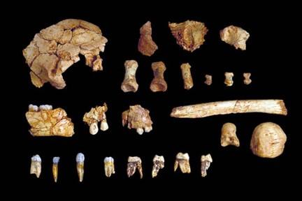 Restos encontrados en la Gran Dolina - Imagen de Burgospedia