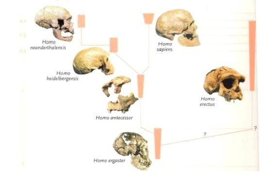 Tipos de humanos encontrados en Atapuerca