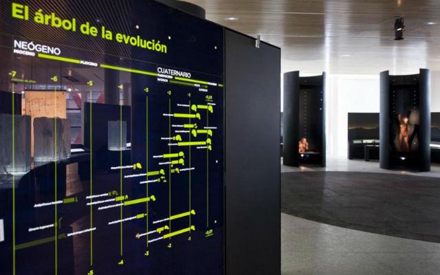 Sala del Museo de la Evolución Humana de Burgos - Imagen de Vidres i Cristalls