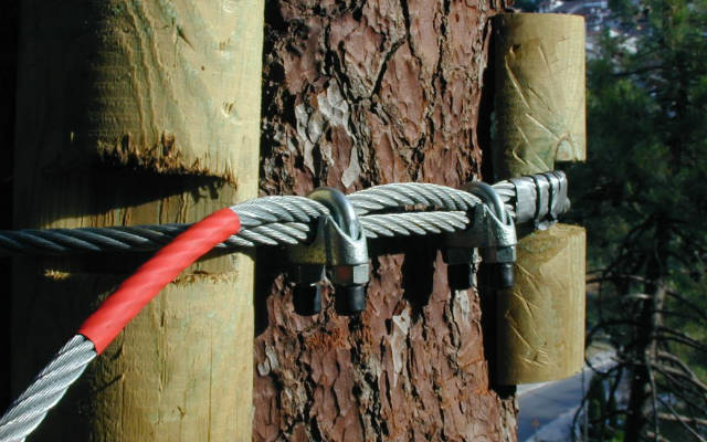 Seguridad, para los árboles y para los visitantes - Fundación Patromonio Natural