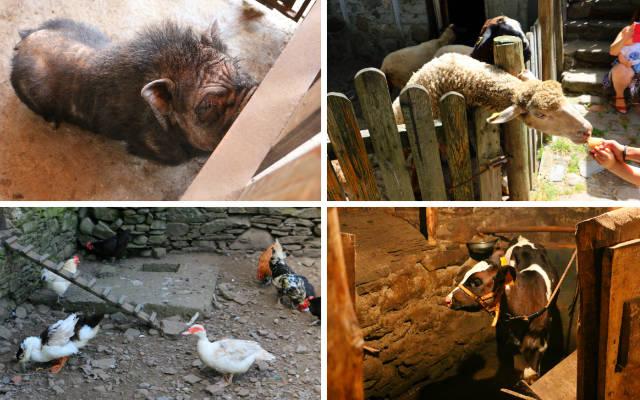 Animales de la Granja La Senda - Destino Castilla y León