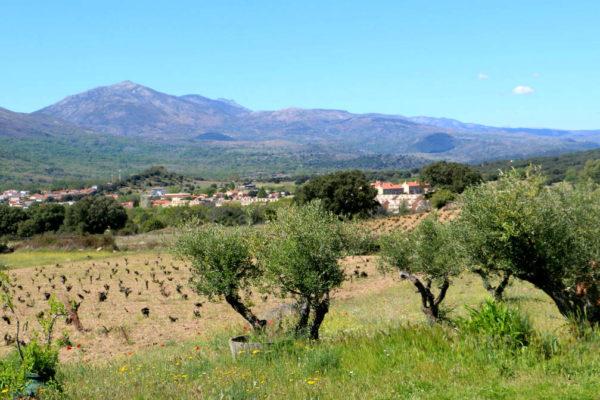 Majuelos de Gredos de la Bodega 7 Navas - Destino Castilla y León