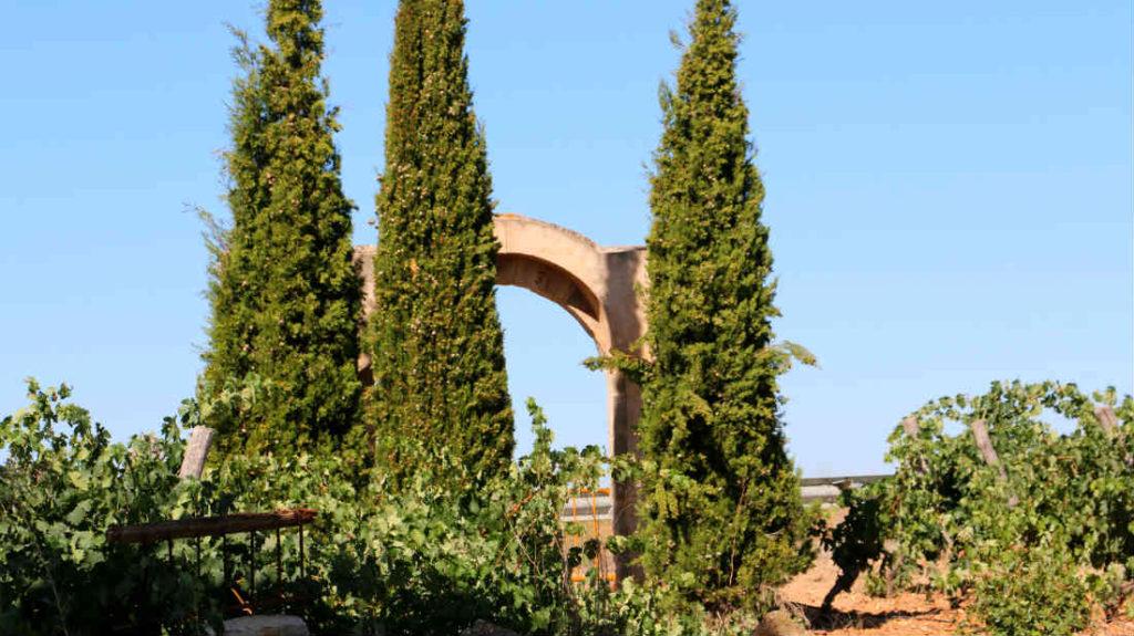 Visita de enouturismo a Bodegas Liberalia - Destino Castilla y León