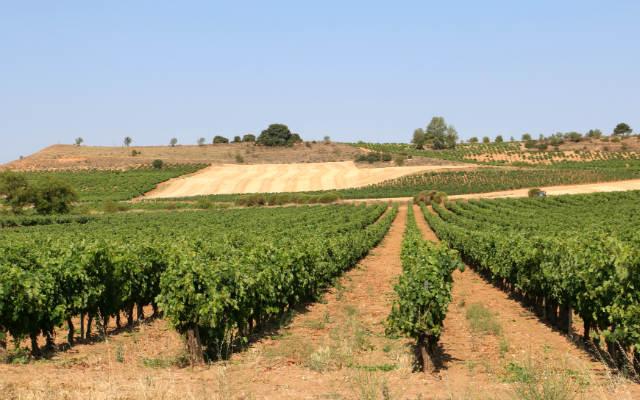 Paisaje de la Ribera del Duero antes de llegar a La Horra - Destino Castilla y León