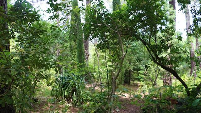 Jardín botánico del Tiétar - Destino Castilla y León