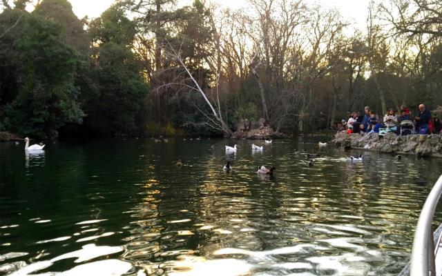 Estanque de patos del Campo Grande - Destino Castilla y León