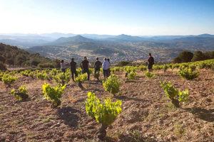 Conociendo las Garnachas de Gredos - Imagen de Agustín Trapero