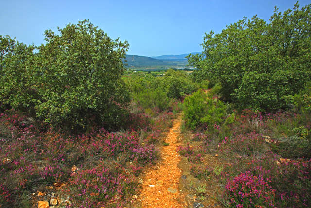 Camino de subida a las minas de Castropodame - Imagen de Cardinalia