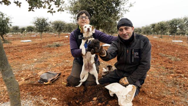 Encontrando trufas en Soria - Imagen de Encifruf