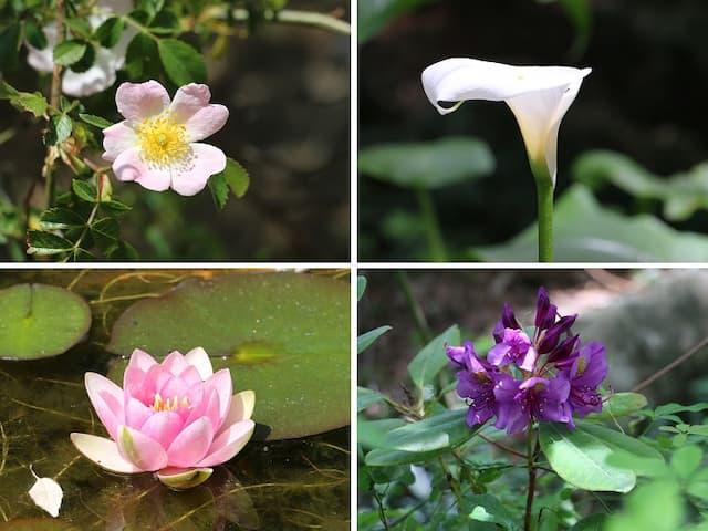 Flores del Jardín Botánico de Tiétar - Destino Castilla y León
