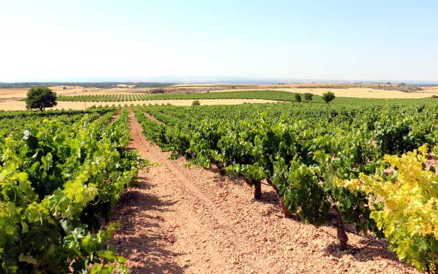 Viñedo en altura en la finca Lamalata - Destino Castilla y León