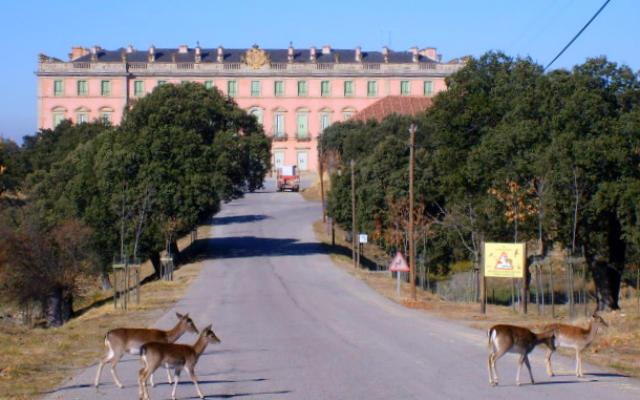 Gamos por el acceso al Palacio de Riofrío - Imagen de Hanway