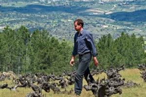 Enoturismo en la Bodega Daniel Ramos
