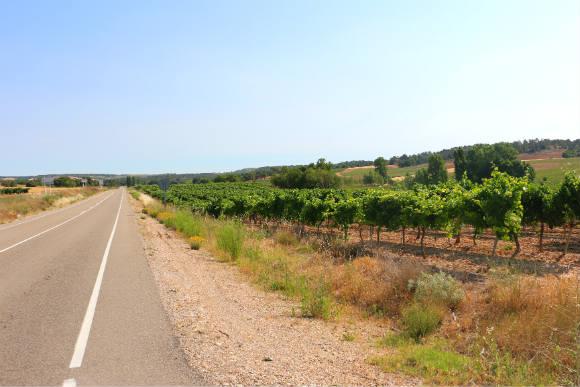Carretera de la Ribera del Duero burgalesa - Destino Castilla y León